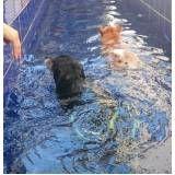 quanto custa fisioterapia canina em sp no Jardim São Luiz