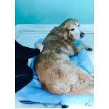 quanto custa fisioterapia canina na Anália Franco