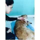 quanto custa fisioterapia para cachorros em Pinheiros
