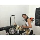 quanto custa formação profissional para banho e tosa em São Caetano do Sul