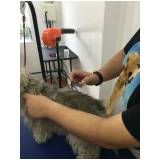 quanto custa Hand-Stripping em Fox Terrier no Alto da Lapa