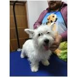 quanto custa Hand-Stripping em Scottish Terrier no Campo Grande