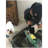 quanto custa hospedagem de cachorro em Cajamar