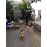 quanto custa Hotelzinho para cachorro na Vila Andrade