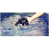 quanto custa natação canina na Água Branca