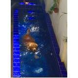 quanto custa natação de cachorro no Campo Grande