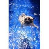quanto custa natação e spa para cachorro em Caieiras