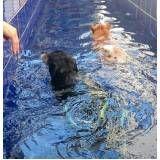 quanto custa natação para cachorro em sp no Tatuapé