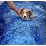 quanto custa natação para cachorro na Sé