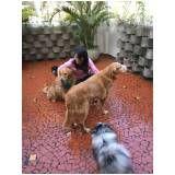 quanto custa serviços para adestrar cães em Perdizes