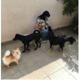 quanto custa Spa para Cachorros na Vila Matilde