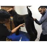 quanto custa Stripping em Cães no Pari