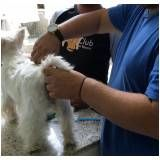 quanto custa Stripping Scottish Terrier no Pacaembu