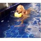 resort e natação para cães no Tremembé