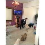 serviço de creche canina na Bela Vista
