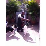 serviço de creche para cachorro em Ferraz de Vasconcelos