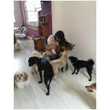 serviço de empresas de adestramento de cachorro no Alto de Pinheiros