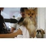 serviço de estética para cães no Alto de Pinheiros