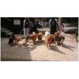 serviço de hotel para cachorro no Parque do Carmo