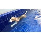 serviço de natação para cães na Casa Verde