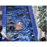 serviço de natação para cão em Jandira