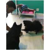 serviço especialista em cães em Cajamar
