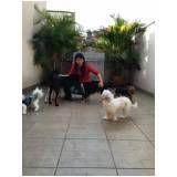 serviço especializado em adestramento de cachorro na Sé