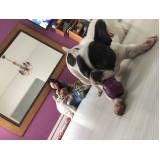 serviço especializado em creche para cães na Lapa