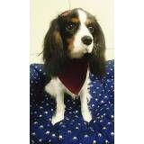 serviço especializado em hotelaria de cães em Caieiras