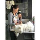 serviço para ensino de banho e tosa em animais na Vila Buarque