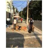 serviços de adestramento canino na Vila Prudente