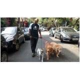 serviços de adestramento para cachorros em Biritiba Mirim