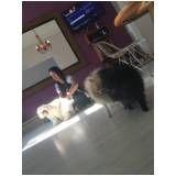 serviços de creche canina em São Bernardo do Campo