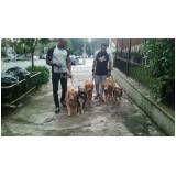 serviços de creche para cachorros na Vila Buarque