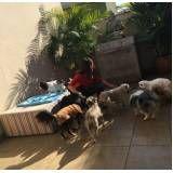 serviços de creche para pet em Pinheiros
