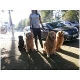 serviços de creches para cães na Vila Esperança