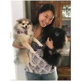 serviços de fisioterapia canina preço em Santa Isabel