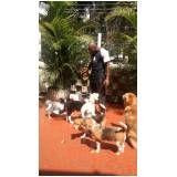 serviços de hospedagens para cachorros no Jardim América