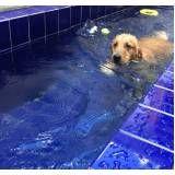 serviços de natação canina na Vila Buarque