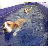 serviços de terapia e natação para cachorro no Cambuci