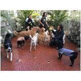 serviços especializados em cachorros no Jaraguá