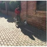 serviços especializados em cães em Ermelino Matarazzo
