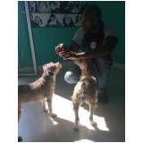 serviços online para adestramento de cães em Perus
