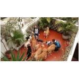 serviços para adestramento de cães na Vila Prudente
