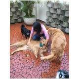 serviços para adestrar cães preço em Santa Cecília