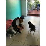 serviços para adestrar cães em Raposo Tavares