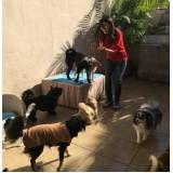 serviços para cães na Lapa