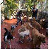 Spa para Cão
