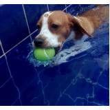 sessão de natação para cachorros em Pinheiros