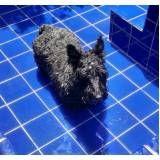 sessão de natação para cães na Pedreira